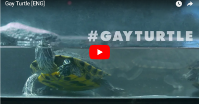 Gay Turtle